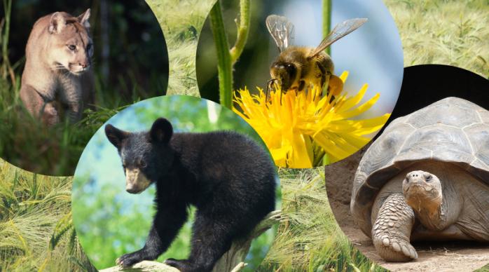 Preserving Nature's BalancingAct